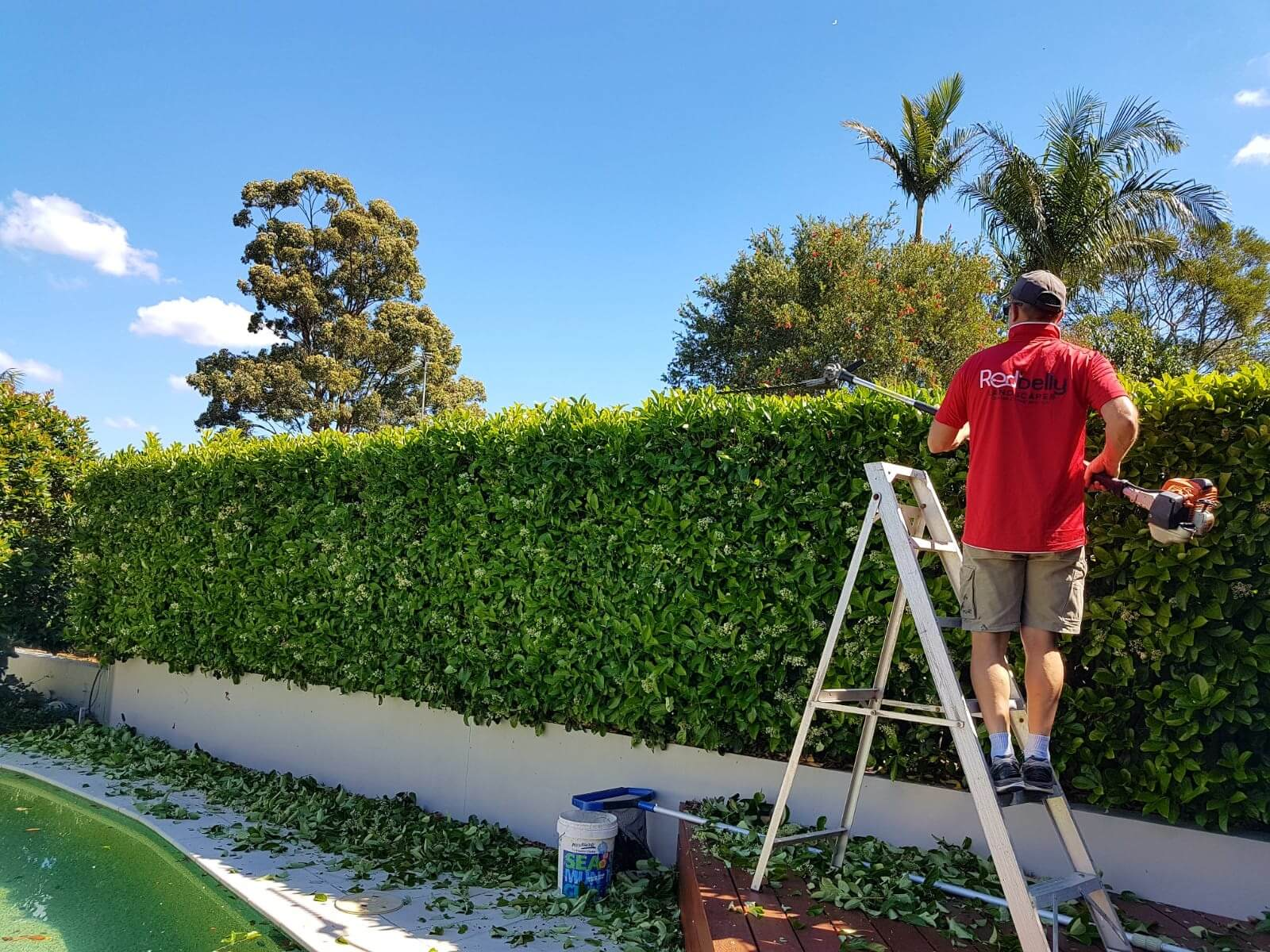 Redbelly Landscapes - Hedge Trimming Services